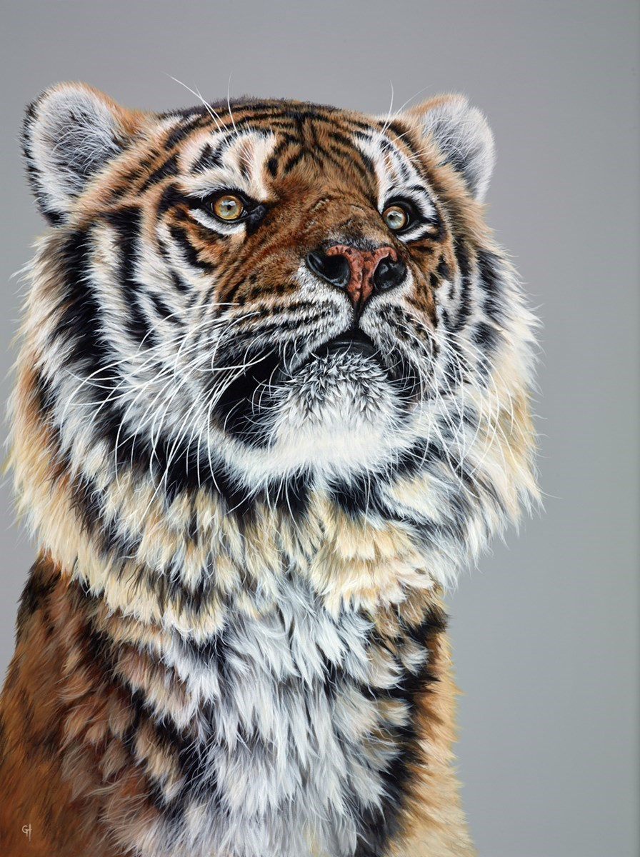 Noble Tiger